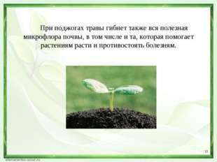* При поджогах травы гибнет также вся полезная микрофлора почвы, в том числе
