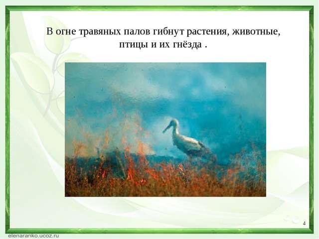 * В огне травяных палов гибнут растения, животные, птицы и их гнёзда .