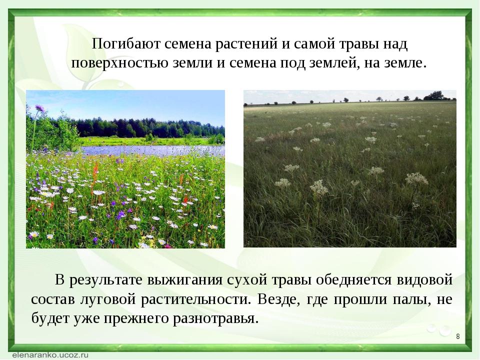 * Погибают семена растений и самой травы над поверхностью земли и семена под...
