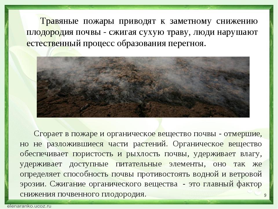 * Травяные пожары приводят к заметному снижению плодородия почвы - сжигая сух...