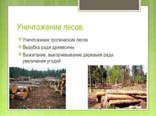 Уничтожение лесов. Уничтожение тропических лесов Вырубка ради древесины Выжиг