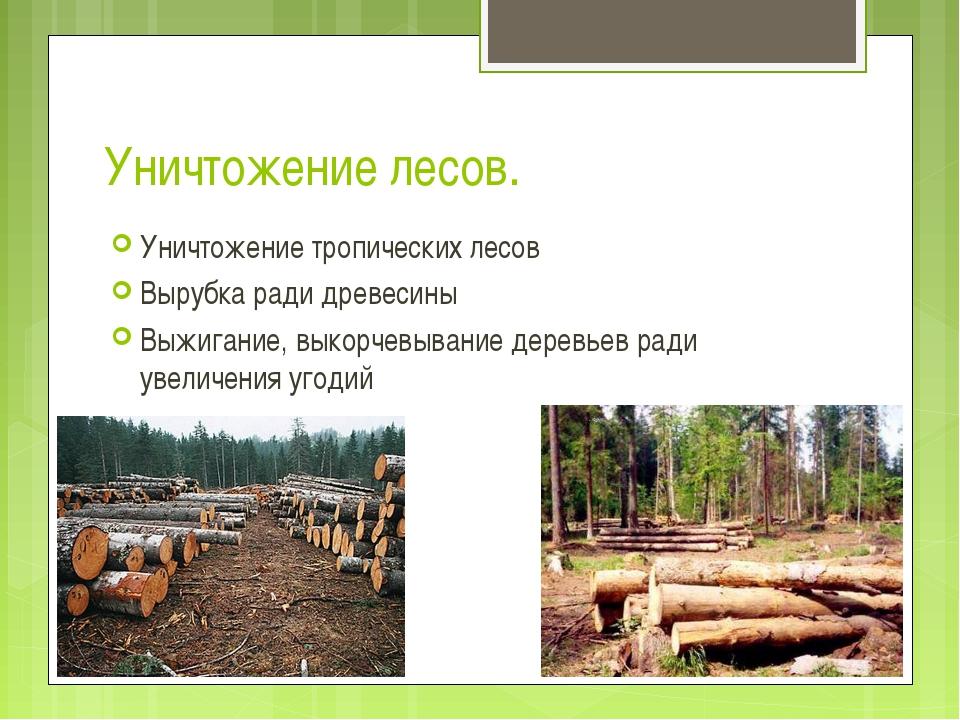 Уничтожение лесов. Уничтожение тропических лесов Вырубка ради древесины Выжиг...