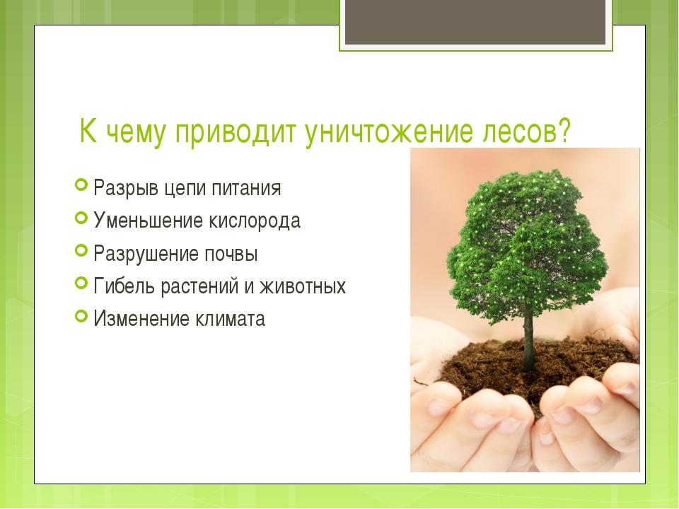 К чему приводит уничтожение лесов? Разрыв цепи питания Уменьшение кислорода Р...