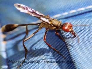 Малярийный комар – переносчик болезней