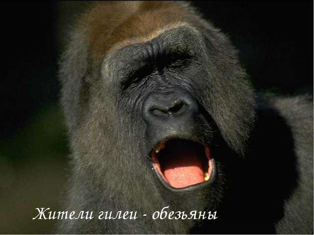 Жители гилеи - обезьяны