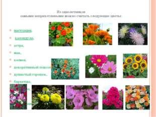 Из однолетников самыми неприхотливыми можно считать следующие цветы: настурци