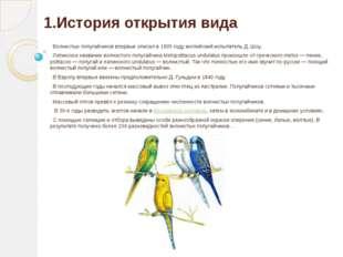 1.История открытия вида Волнистых попугайчиков впервые описал в 1805 году анг