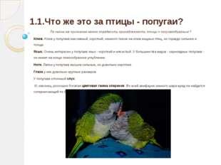 1.1.Что же это за птицы - попугаи? По каким же признакам можно определить при