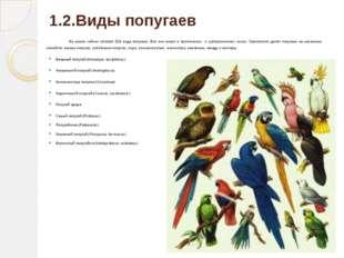 1.2.Виды попугаев На земле сейчас обитает 324 вида попугаев. Все они живут в