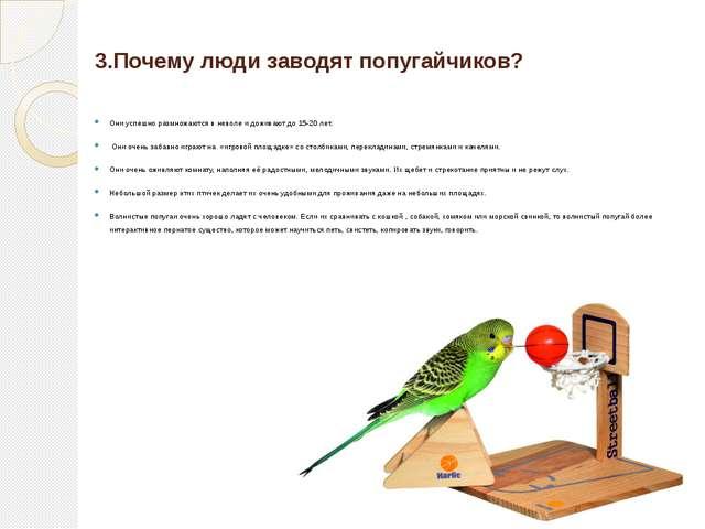 3.Почему люди заводят попугайчиков? Они успешно размножаются в неволе и дожи...