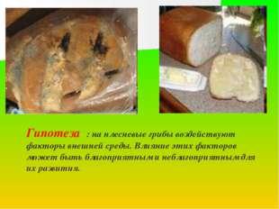 Гипотеза : на плесневые грибы воздействуют факторы внешней среды. Влияние эти