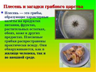 Плесень и загадки грибного царства Плесень — это грибы, образующие характерны