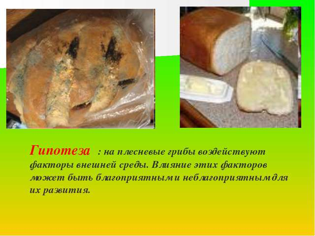 Гипотеза : на плесневые грибы воздействуют факторы внешней среды. Влияние эти...