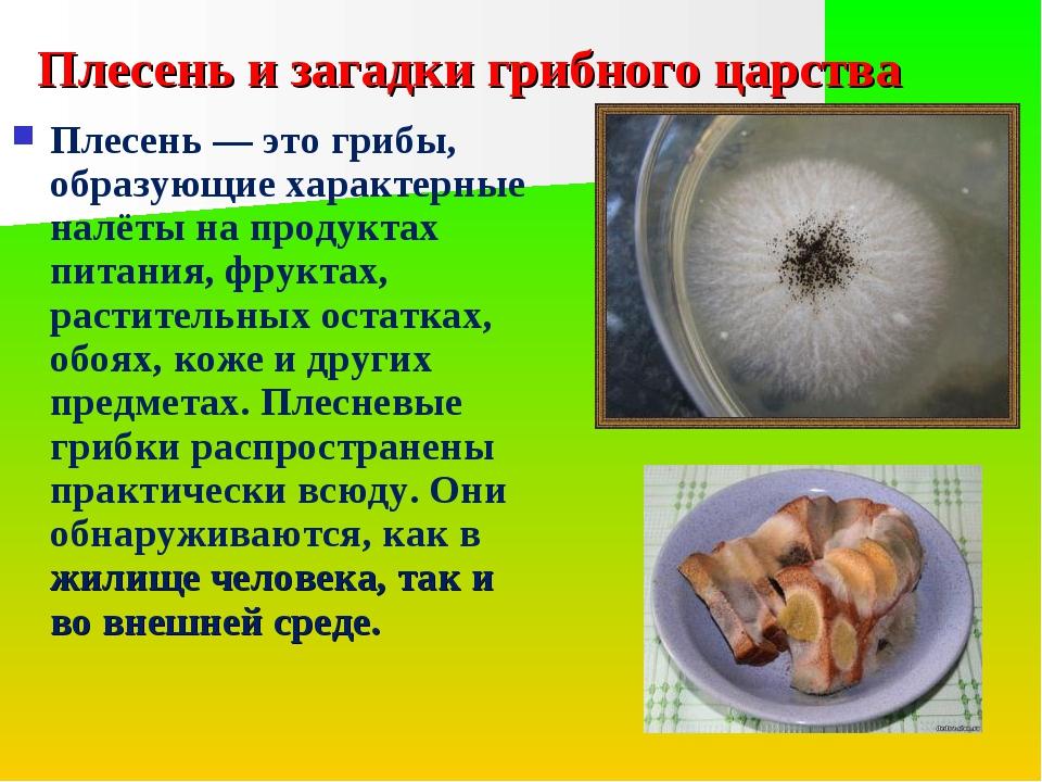 Плесень и загадки грибного царства Плесень — это грибы, образующие характерны...