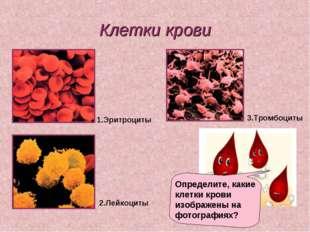 Клетки крови Определите, какие клетки крови изображены на фотографиях? 1.Эрит