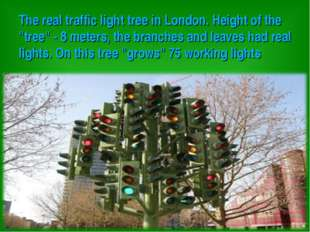 """The real traffic light tree in London. Height of the """"tree"""" - 8 meters, the"""