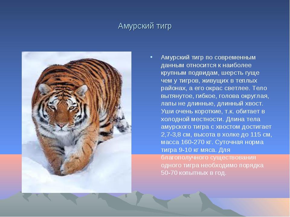 Амурский тигр Амурский тигр по современным данным относится к наиболее крупны...