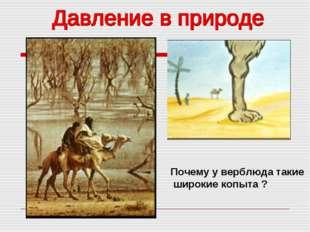 Почему у верблюда такие широкие копыта ?
