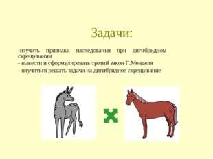 Задачи: -изучить признаки наследования при дигибридном скрещивании - вывести