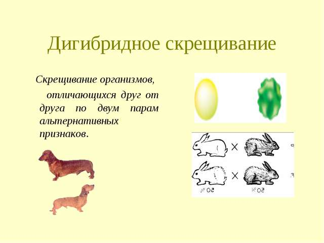 Дигибридное скрещивание Скрещивание организмов, отличающихся друг от друга по...