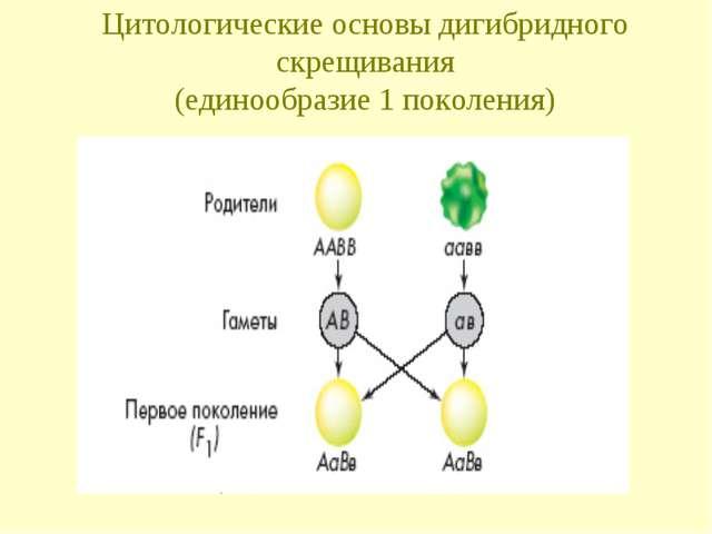 Цитологические основы дигибридного скрещивания (единообразие 1 поколения)