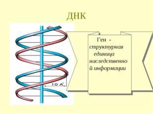 ДНК Ген - структурная единица наследственной информации