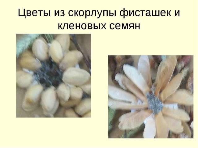 Цветы из скорлупы фисташек и кленовых семян