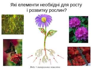 Які елементи необхідні для росту і розвитку рослин?