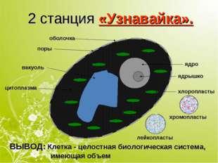 2 станция «Узнавайка». оболочка ядро поры ядрышко хлоропласты вакуоль цитопла