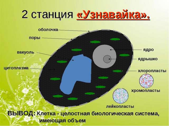 2 станция «Узнавайка». оболочка ядро поры ядрышко хлоропласты вакуоль цитопла...