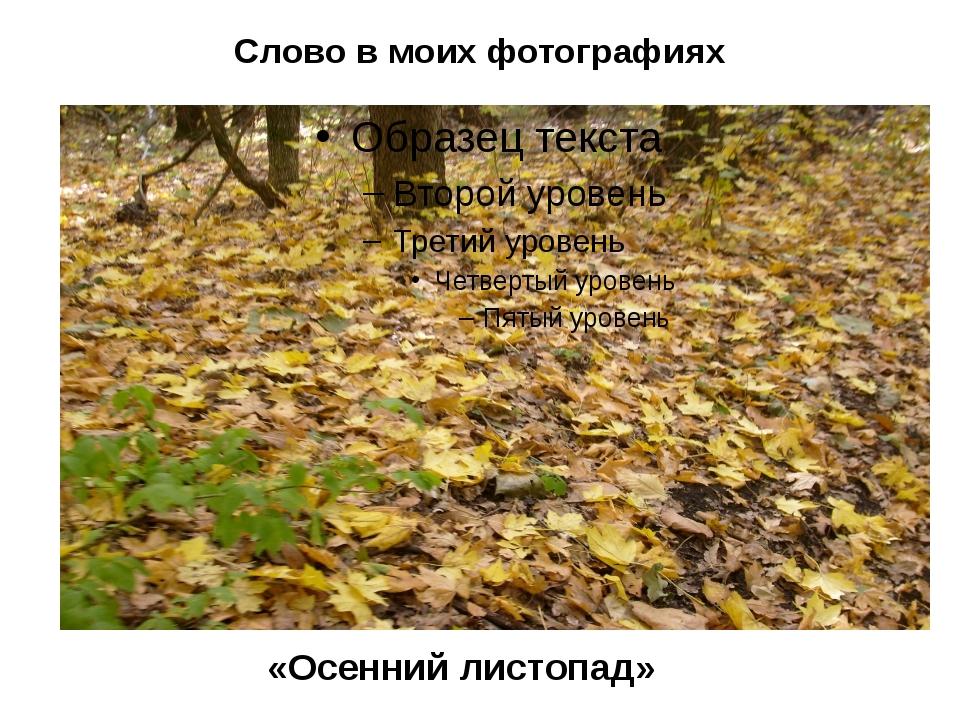 Слово в моих фотографиях «Осенний листопад»