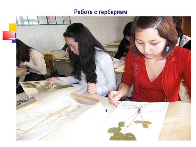Работа с гербарием