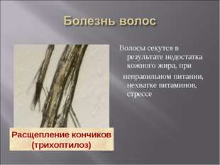 Волосы секутся в результате недостатка кожного жира, при неправильном питани