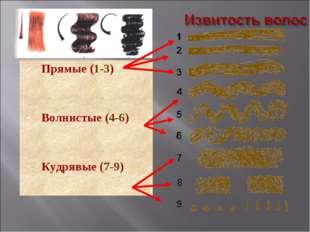 Прямые (1-3) Волнистые (4-6) Кудрявые (7-9)
