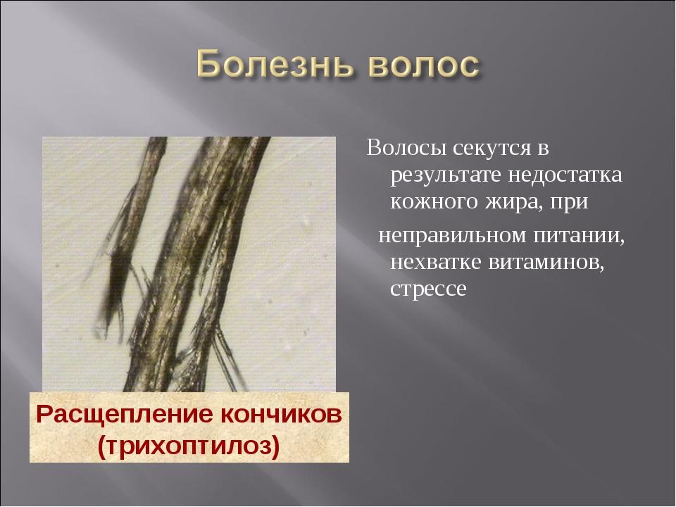 Волосы секутся в результате недостатка кожного жира, при неправильном питани...