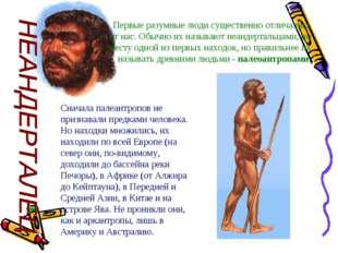 Первые разумные люди существенно отличались от нас. Обычно их называют неанде