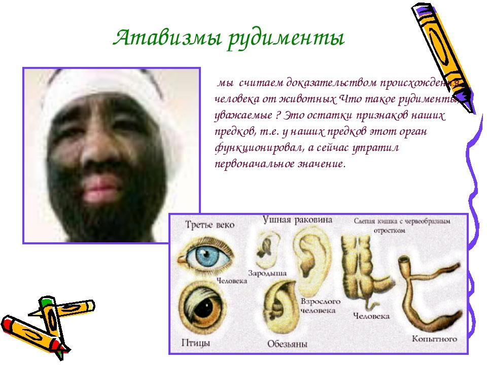 Атавизмы рудименты мы считаем доказательством происхождения человека от живот...