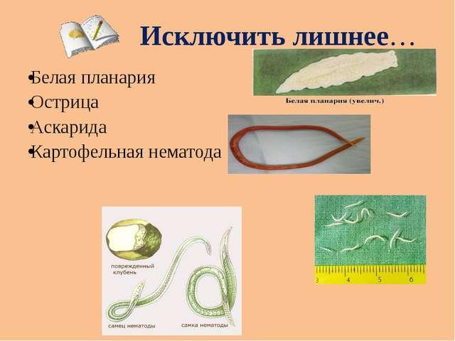 Исключить лишнее… Белая планария Острица Аскарида Картофельная нематода