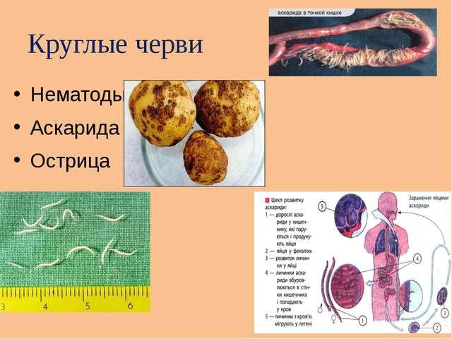 Круглые черви Нематоды Аскарида Острица