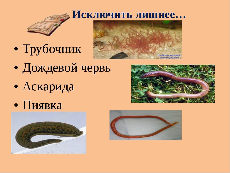 Исключить лишнее… Трубочник Дождевой червь Аскарида Пиявка
