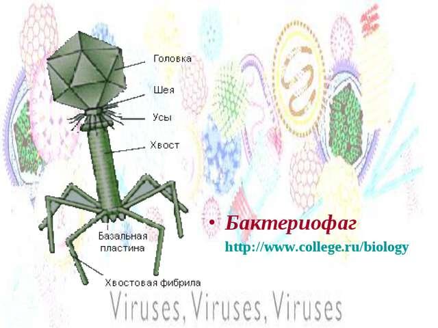 Бактериофаг http://www.college.ru/biology