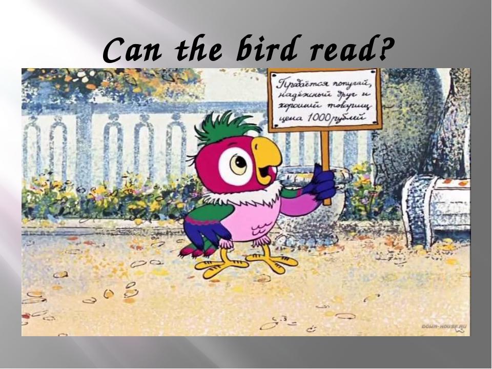 Can the bird read?