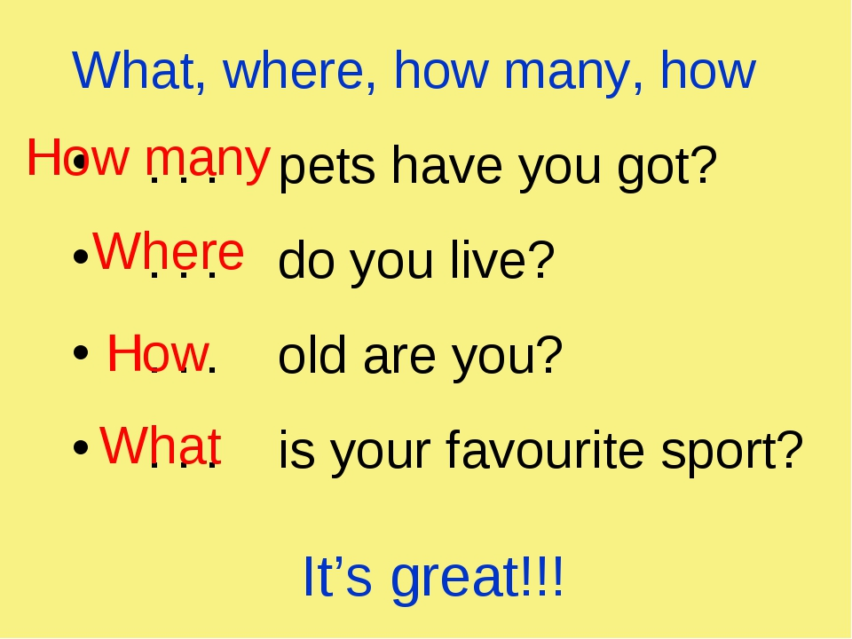 What, where, how many, how . . . pets have you got? . . . do you live? . . ....