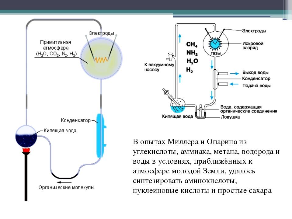 В опытах Миллера и Опарина из углекислоты, аммиака, метана, водорода и воды в...