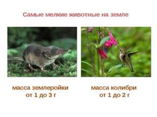 Самые мелкие животные на земле масса колибри от 1 до 2 г масса землеройки от