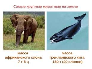 масса африканского слона 7 т 5 ц масса гренландского кита 150 т (20 слонов) С