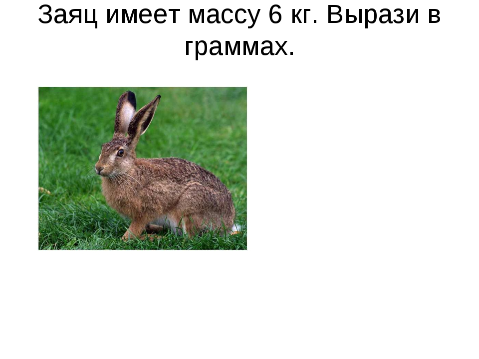 Заяц имеет массу 6 кг. Вырази в граммах.