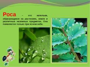Роса – это капельки, образующиеся на растениях, земле и различных наземных пр