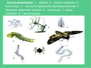 Беспозвоночные 1 - амёба; 2 - гидра зелёная; 3 - описторх; 4 - личинка бражни