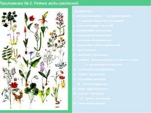 Приложение № 2. Редкие виды растений 1 -водяной орех; 2 - венерин башмачок кр